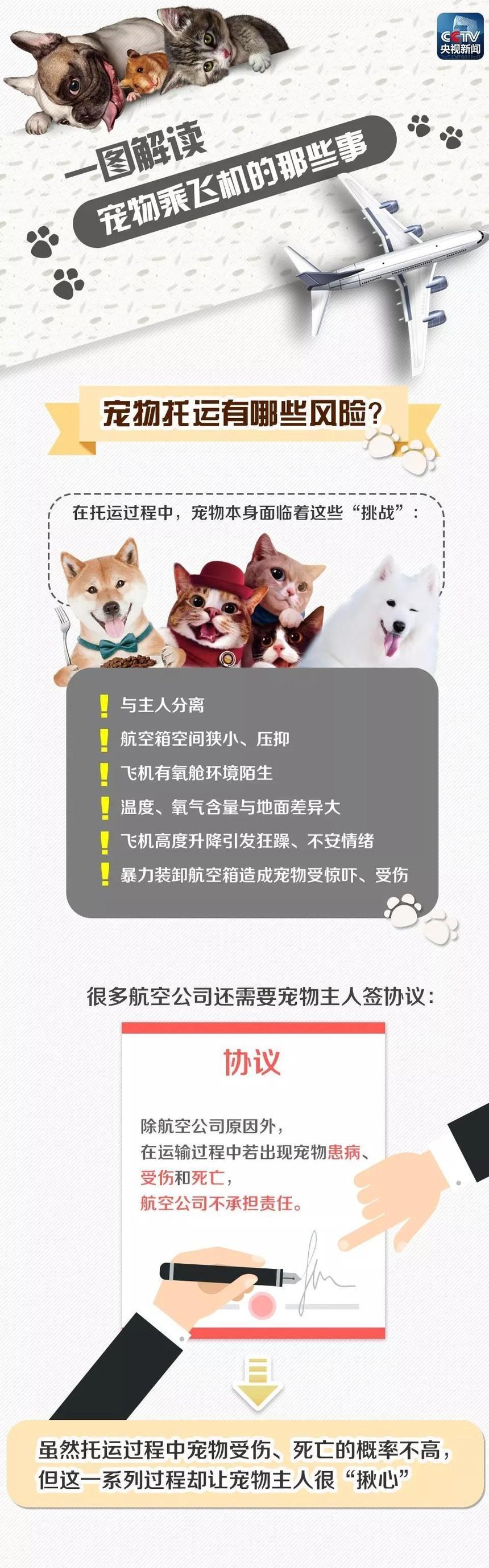 杭州宠物托运注意事项