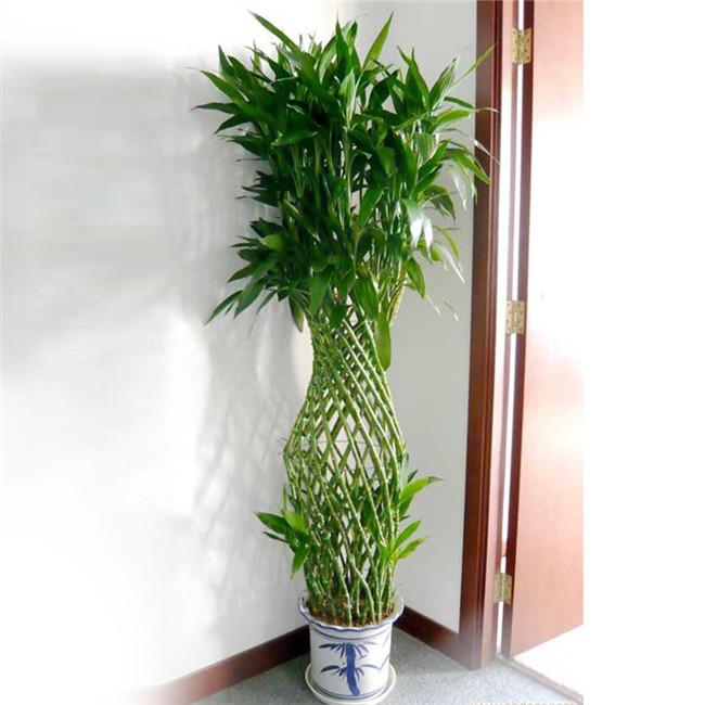 重庆植物租赁大型植物