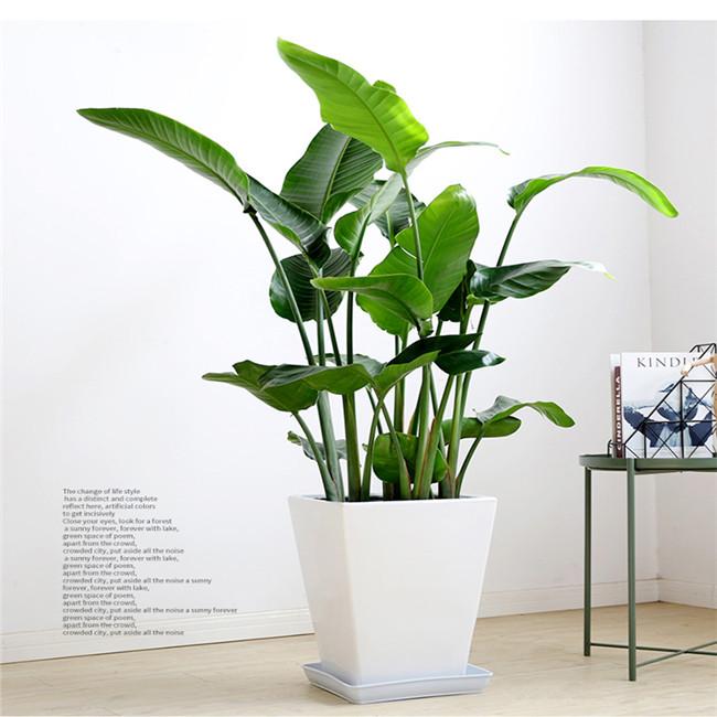 重庆植物租摆大型植物