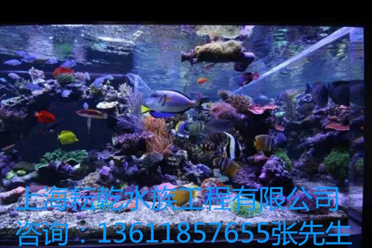 亚克力鱼缸定制就找上海耘乾水族工程有限公司咨询13162356777