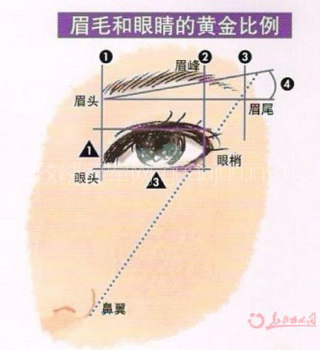眉型设计 不完美眉毛怎么美化